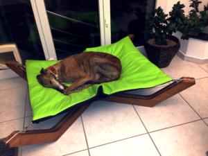 Galgo Windhund im Doxx Lounge Hundebett