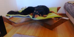 Hovawart Marley im Hundebett Doxx Lounge