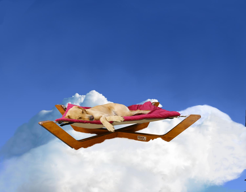 Hundebett Doxx Lounge in den Wolken