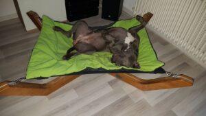 Hundebett, Hundeliege, Hund erholsamer Schlaf,