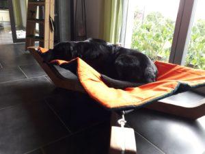 Hundemöbel, Hundesofa, Hundeliegen, Hundehängematte